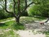 fotoos denemarken mei 2010 055.JPG